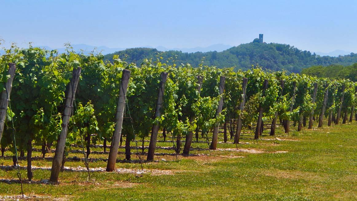 produzione vini Di Gaspero